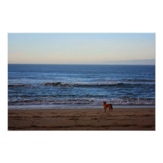 Dog watching the waves Canvas Poster