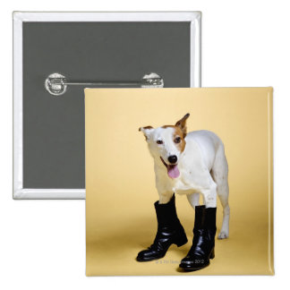 Dog wearing boots button