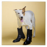 Dog wearing boots large square tile