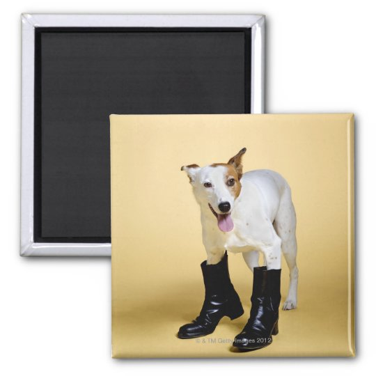 Dog wearing boots magnet