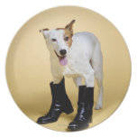 Dog wearing boots plate