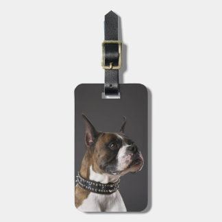 Dog wearing collar, looking away bag tag
