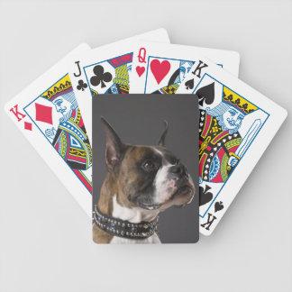 Dog wearing collar, looking away bicycle playing cards