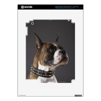 Dog wearing collar, looking away iPad 3 skins