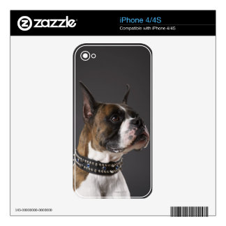 Dog wearing collar, looking away iPhone 4 skin