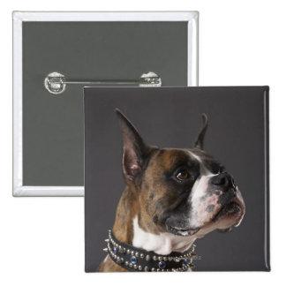 Dog wearing collar, looking away pinback button