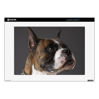 Dog wearing collar, looking away decal for laptop