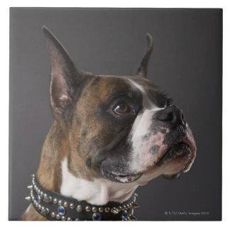 Dog wearing collar, looking away large square tile