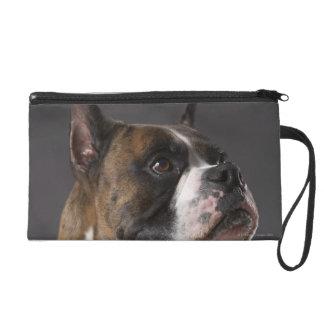 Dog wearing collar, looking away wristlet