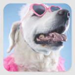 Dog wearing heart shaped classes and tu-tu stickers