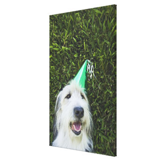 Dog wearing party hat canvas print