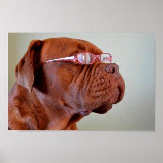 Dog Wearing Pink Eyeglasses Poster