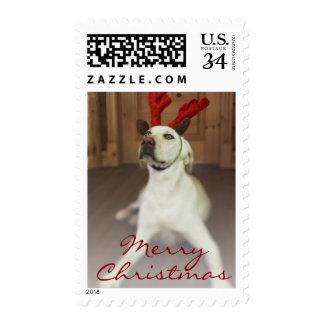Dog wearing reindeer antlers postage
