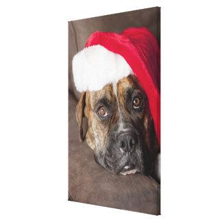 Dog wearing Santa hat Canvas Print