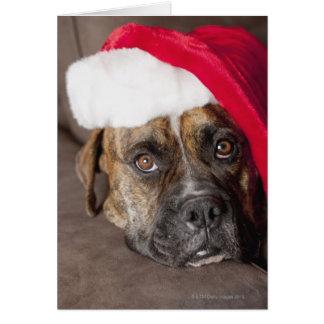 Dog wearing Santa hat Greeting Card
