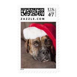 Dog wearing Santa hat Postage