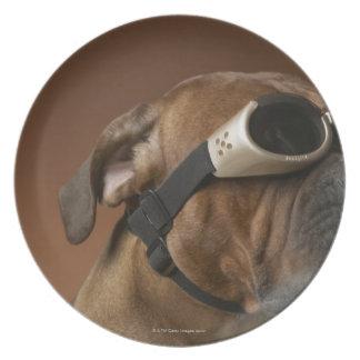 Dog wearing sunglasses 2 dinner plate