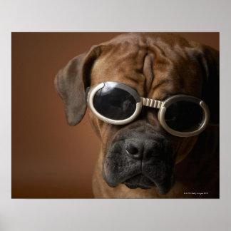 Dog wearing sunglasses poster