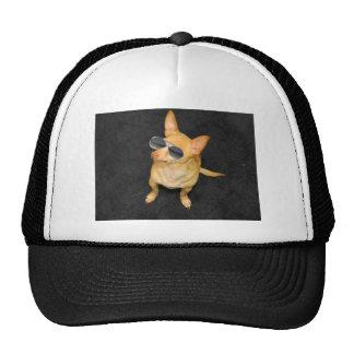 Dog wearing sunglasses trucker hat