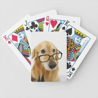 Dog wearing  tie and glasses sitting on chair bicycle playing cards