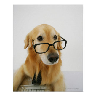 Dog wearing  tie and glasses sitting on chair in poster