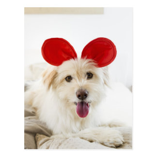 Dog wearing toy ears on bed postcard