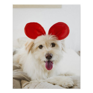 Dog wearing toy ears on bed poster