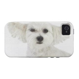 Dog winking iPhone 4/4S case