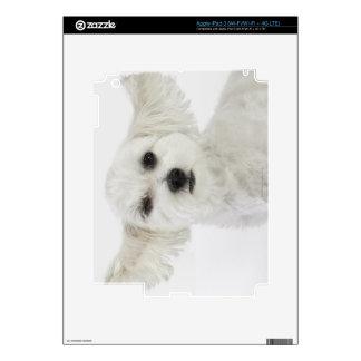 Dog winking iPad 3 skins
