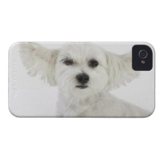 Dog winking iPhone 4 case