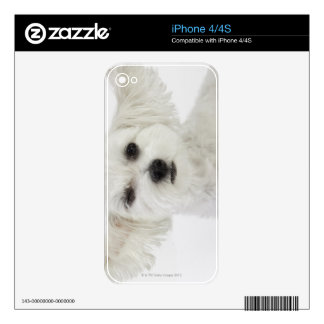 Dog winking iPhone 4S decals