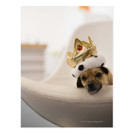 Dog with a crown postcards