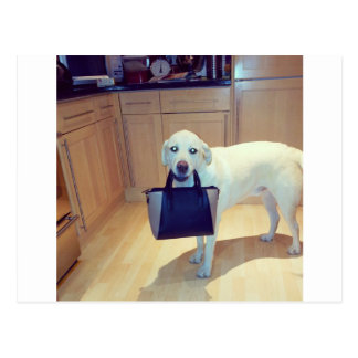 Dog with a handbag postcard