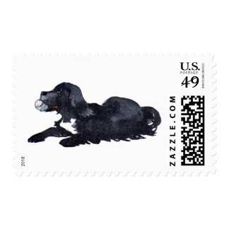 Dog with Ball Wants to Play Fetch Postage