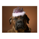 Dog with birthday crown on head postcard