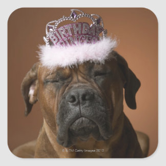 Dog with birthday crown on head square stickers