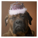 Dog with birthday crown on head tile