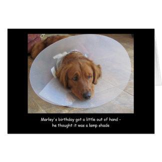 Dog with Cone Birthday Card