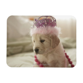 Dog with decorations on bed magnet
