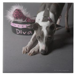 Dog with diva bowl, sniffing floor ceramic tile