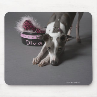 Dog with diva bowl, sniffing floor mouse pad
