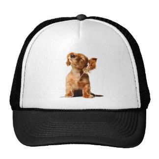 Dog with earphones hats