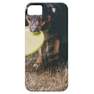 Dog With Frisbee in Mouth iPhone 5 Cases