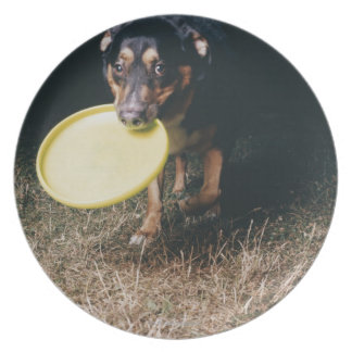 Dog With Frisbee in Mouth Plate