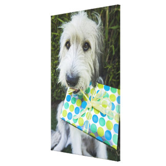 Dog with gift in mouth canvas print