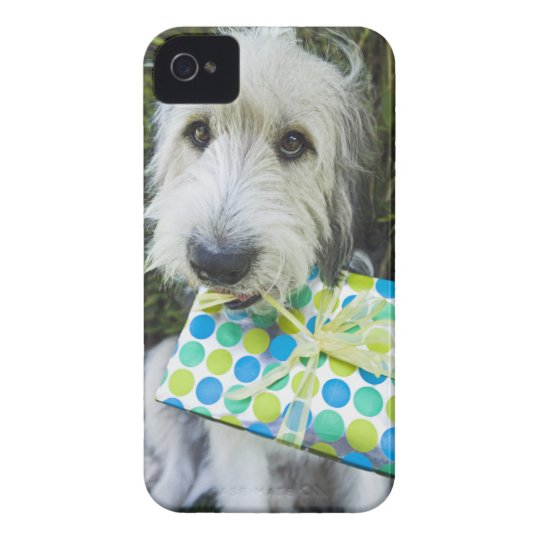 Dog with gift in mouth iPhone 4 Case-Mate case
