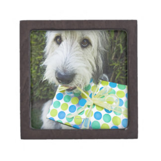 Dog with gift in mouth premium jewelry box