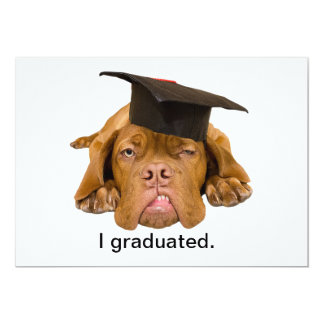 dog with graduation hat personalized announcements