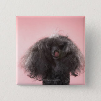 Dog with hair in front of face and tongue out button