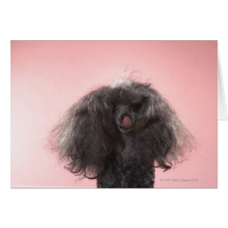 Dog with hair in front of face and tongue out card